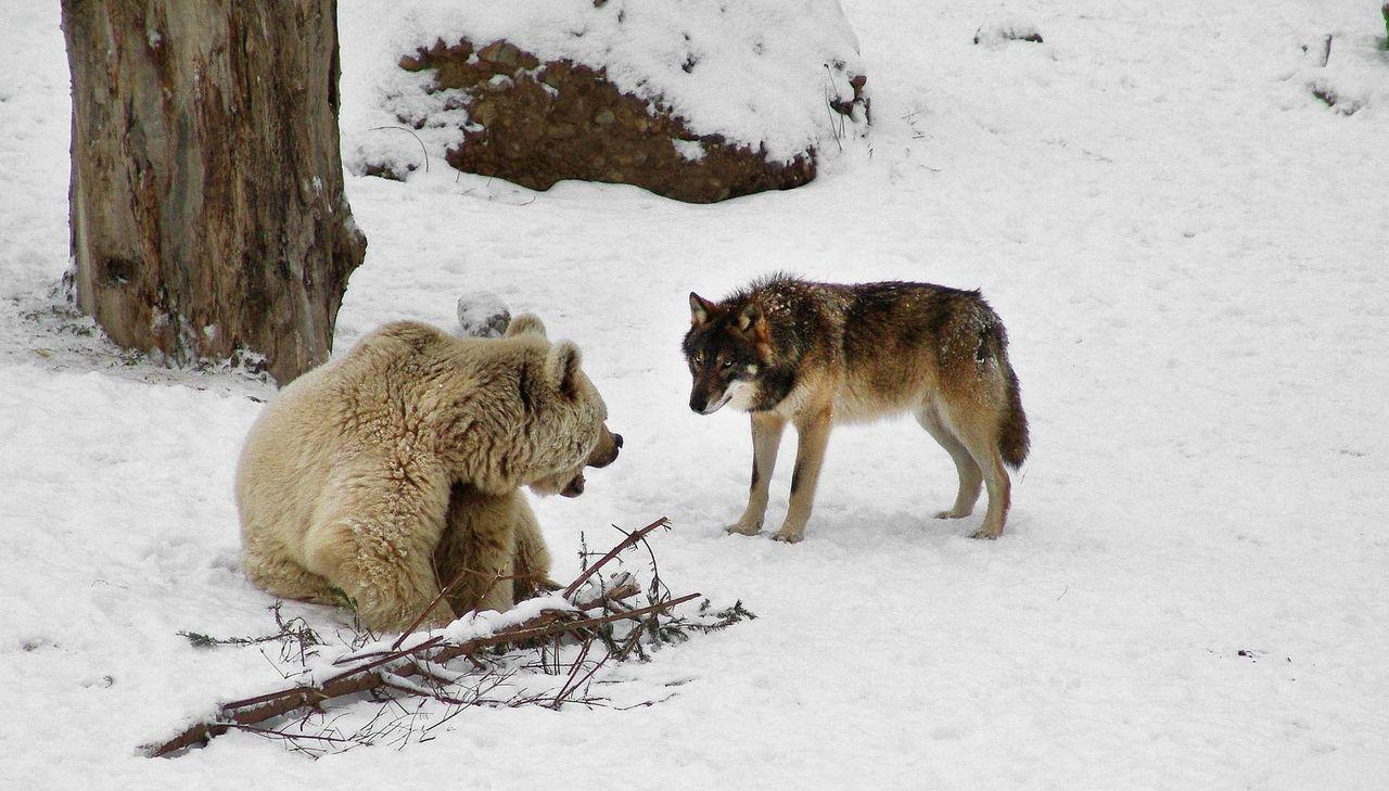 Natur- & Tierpark Goldau