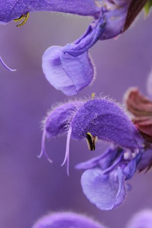 Achtsamkeit - Die Natur als Vorbild mit Jasmin