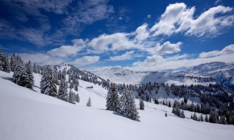 Oberberg cross-country ski run for ambitious skiers