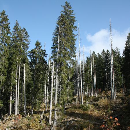 Guided tours in and around the Bödmeren forest reserve