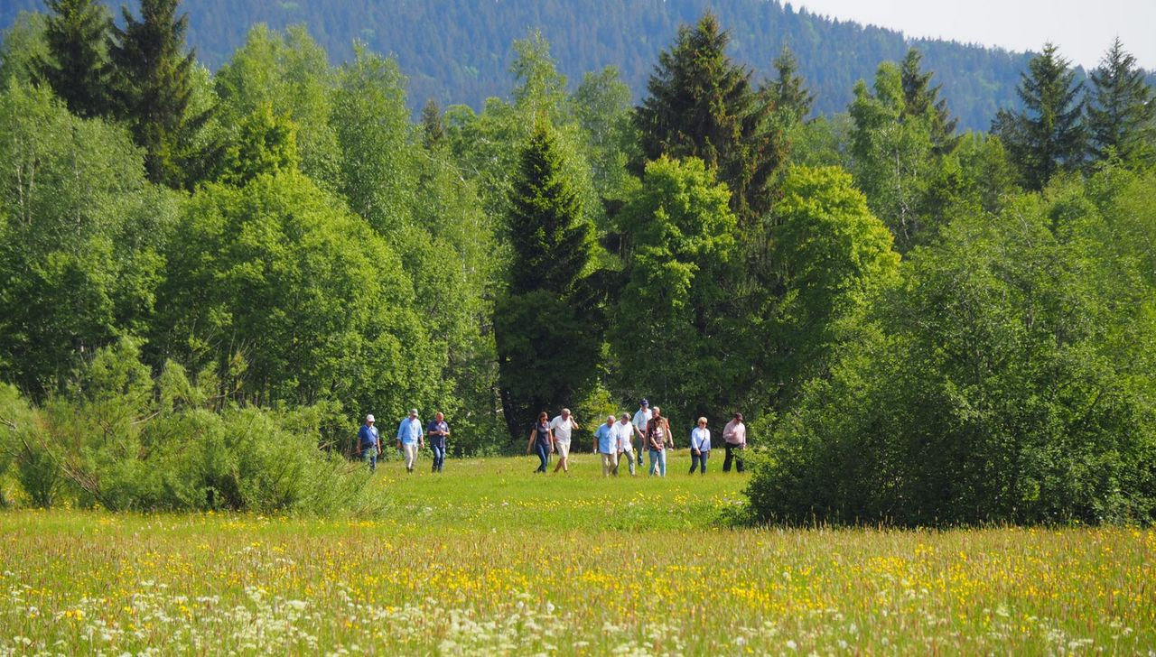 Guided tour – Rothenthurm raised bog