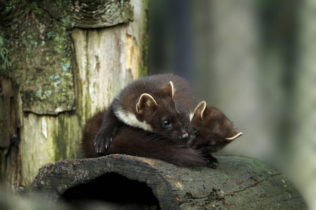 Goldau Nature Park and Zoo