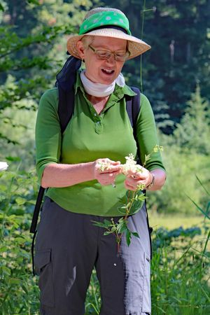 Guided tour – herb hikes and courses with the medicinal plant lady
