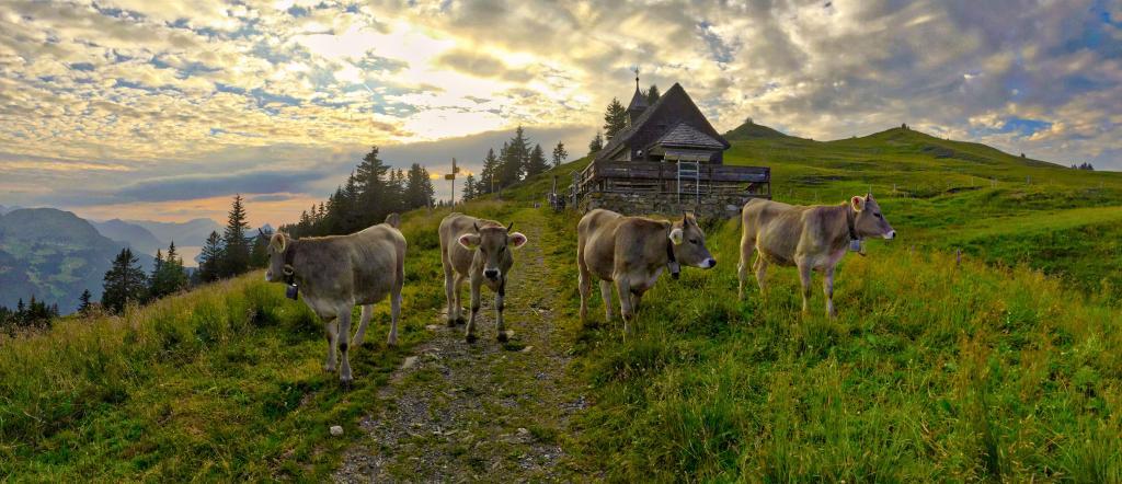 Bahnentour Mythenregion – Hoch-Ybrig