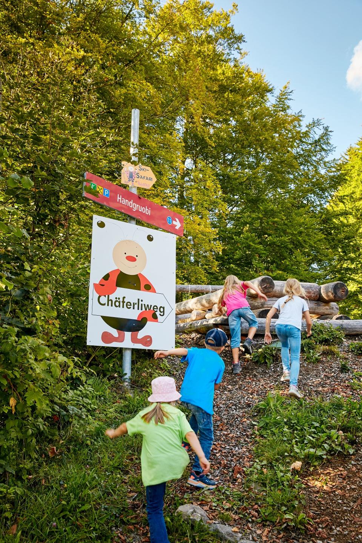 Ladybird Trail, Illgau