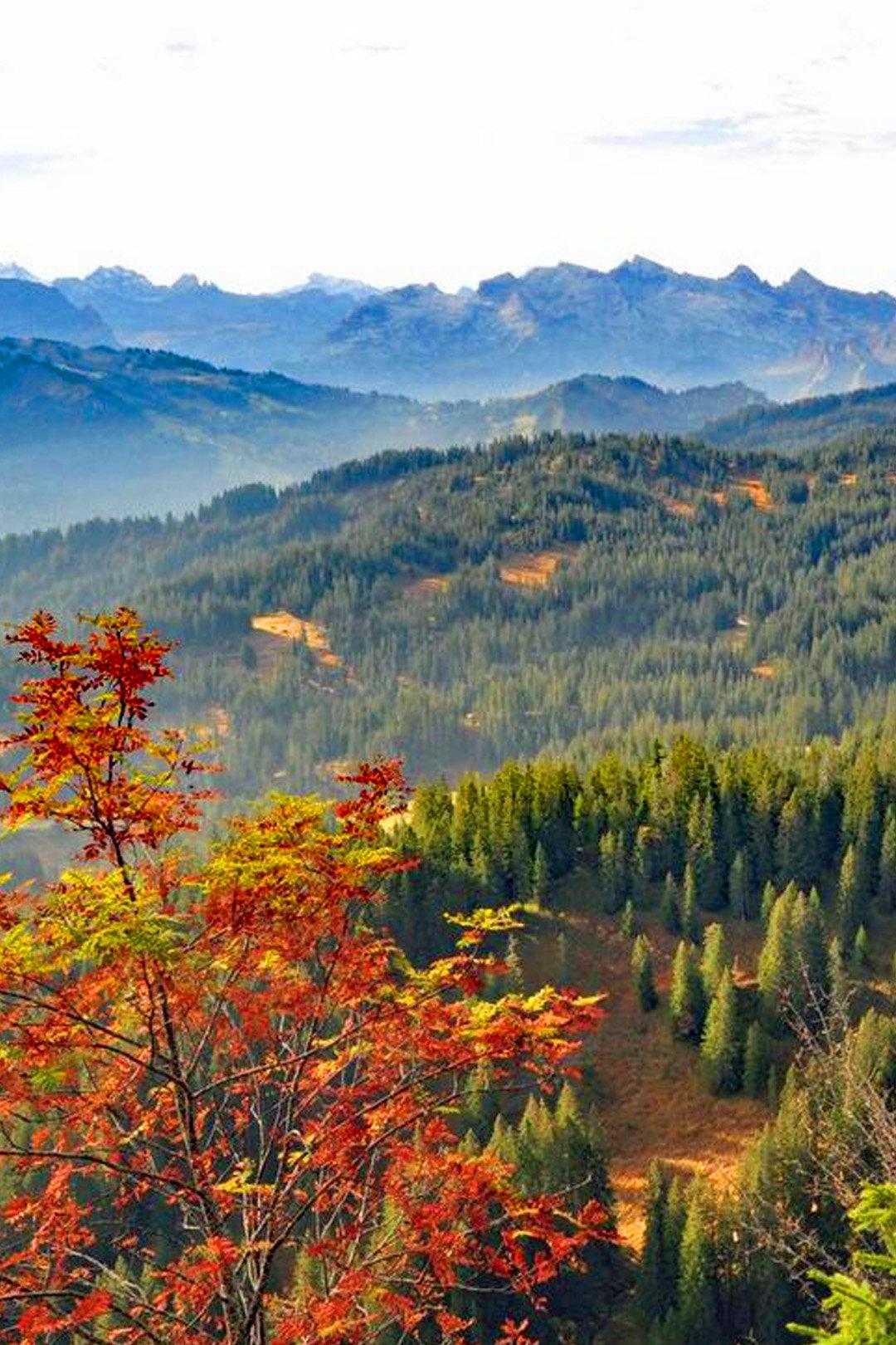 "Hiking combination ""Moorwälder Ibergeregg"""
